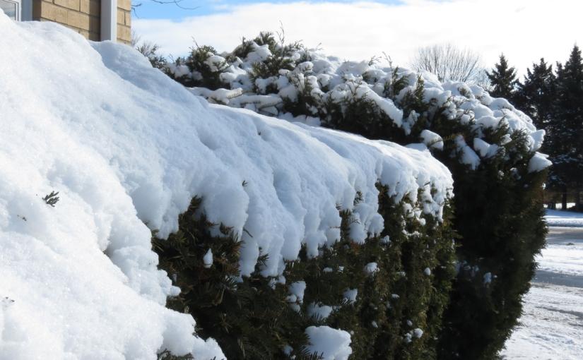 Wordless Wednesday: Snow