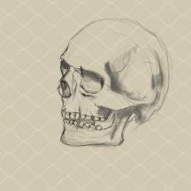 SkullStudy-Jan22(1)